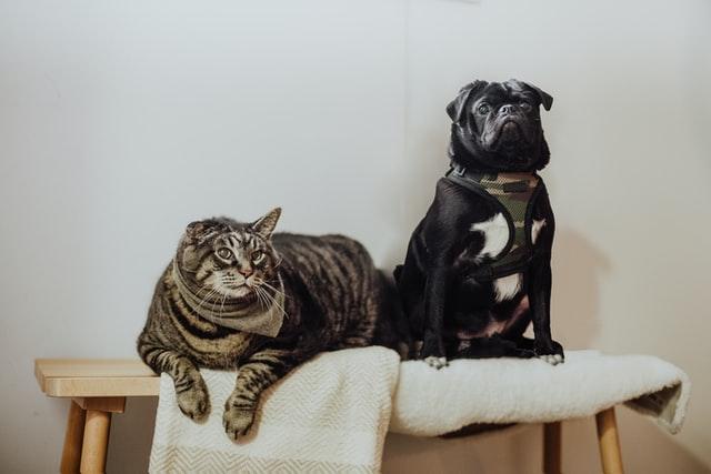 Waar moet je op letten bij het aanschaffen van een huisdier?